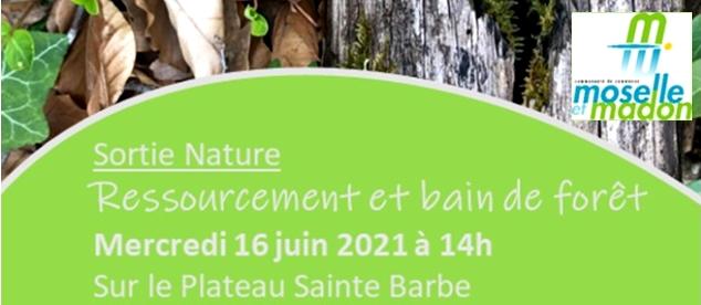 Ressourcement et bain de forêt sur le Plateau Sainte-Barbe